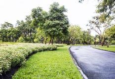 trädgårds- landskaptree för höst Royaltyfria Bilder