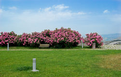 trädgårds- lawn arkivbilder