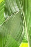 trädgårds- leaffjäder för design Arkivfoton