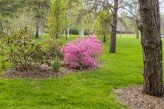 Trädgårds- liggande Arkivbild
