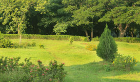 Trädgårds- liggande Royaltyfria Bilder