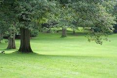 trädgårds- liggande Fotografering för Bildbyråer