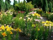trädgårds- lilja Royaltyfri Bild