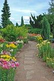 trädgårds- liljar Arkivbilder