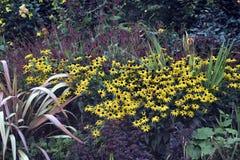 trädgårds- litet Royaltyfri Fotografi
