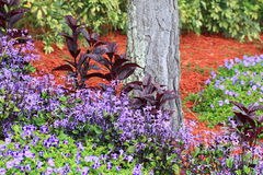 trädgårds- litet Arkivfoton