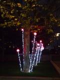 Trädgårds- ljus Royaltyfria Foton