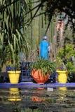 trädgårds- majorelle Royaltyfri Fotografi