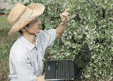 trädgårds- manbarn för Cherry royaltyfri foto