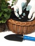 trädgårds- manworking Royaltyfria Foton