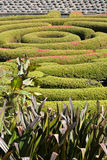 trädgårds- maze Arkivbilder