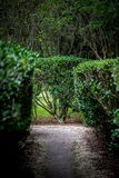 trädgårds- maze Arkivfoton