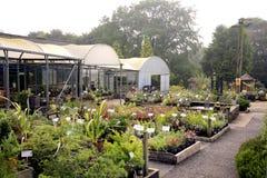 Trädgårds- mitt Arkivbild