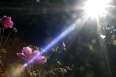 trädgårds- morgon Arkivfoto