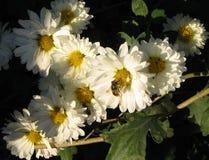 trädgårds- morgon för höst arkivbild