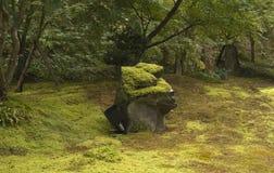 trädgårds- moss arkivfoton