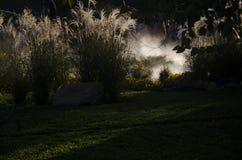 trädgårds- natt Royaltyfri Foto