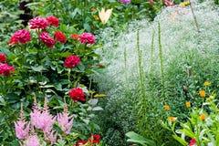 trädgårds- natur fotografering för bildbyråer