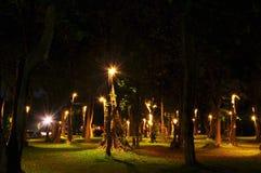 trädgårds- nighttime Arkivfoto
