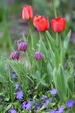 Trädgårds- nr1 Royaltyfria Foton