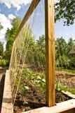 trädgårds- nytt organiskt Royaltyfria Bilder