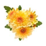 trädgårds- orange spray för chrysanthemum arkivfoto