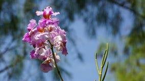 trädgårds- orchid Arkivbild