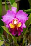 trädgårds- orchids Arkivfoton