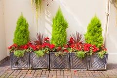 Trädgårds- ordning av planters Royaltyfria Foton