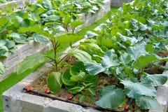 trädgårds- organisk grönsak Royaltyfria Foton