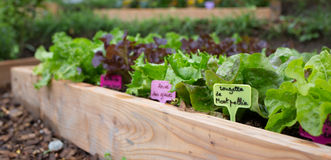 trädgårds- organisk grönsak Arkivfoto