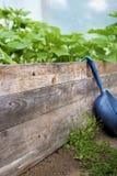 trädgårds- organiskt Royaltyfri Bild