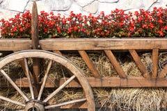 Trädgårds- oxevagn Fotografering för Bildbyråer