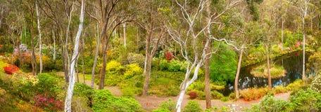 Trädgårds- panorama för rhododendron Arkivbild