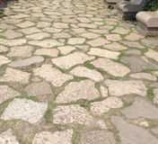Trädgårds- paverabstrakt begreppmodell Royaltyfri Fotografi