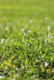 trädgårds- perspektiv för makro för gräsgreenlawn royaltyfria bilder