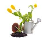 trädgårds- plantera Arkivfoto