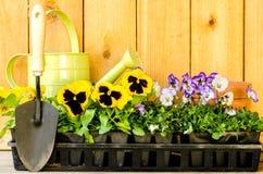 Trädgårds- plantera Fotografering för Bildbyråer