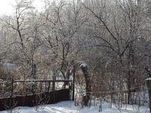 Trädgårds- port i snön och busksnåren Arkivbilder
