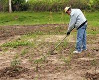 Trädgårds- preperation Arkivfoto