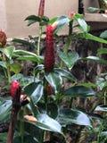 trädgårds- red för blomma Arkivfoton