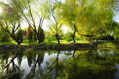 trädgårds- reflexion Royaltyfria Foton