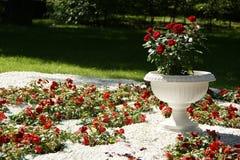 trädgårds- ro Royaltyfri Bild