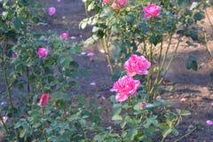 trädgårds- ro Royaltyfria Foton