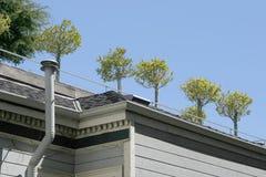 trädgårds- rooftop Royaltyfri Fotografi
