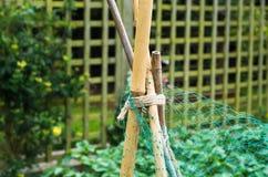 Trädgårds- rottingar Arkivbilder