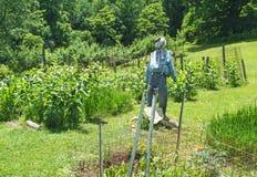 trädgårds- scarecrow fotografering för bildbyråer