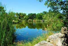 Trädgårds- sjö Royaltyfri Fotografi