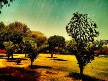 Trädgårds- skönhet Arkivbilder