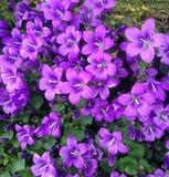 Trädgårds- skönhet Arkivfoto